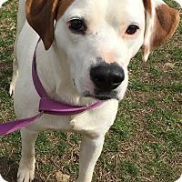 Adopt A Pet :: Rick - Morehead, KY