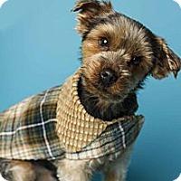 Adopt A Pet :: Duffy - Baton Rouge, LA
