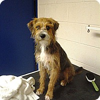 Adopt A Pet :: RI JODY - W. Warwick, RI