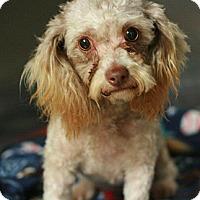Adopt A Pet :: Gabrielle - Canoga Park, CA