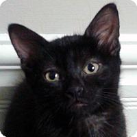 Adopt A Pet :: Callaway - Calgary, AB