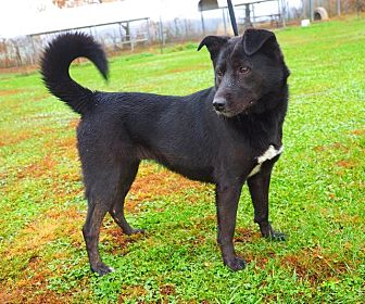 Border Collie Mix Dog for adoption in Washburn, Missouri - Little Debbie