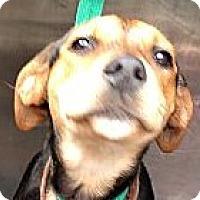 Adopt A Pet :: Kelsey! - St Petersburg, FL