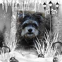 Adopt A Pet :: Markie - Crowley, LA