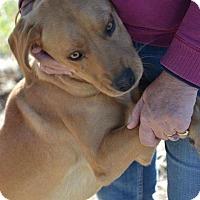 Adopt A Pet :: Shiloh - Albemarle, NC