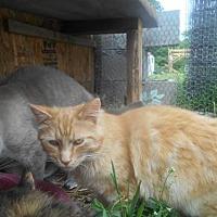 Adopt A Pet :: Junior - Zaleski, OH
