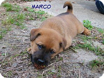 Marco Island Cat Rescue