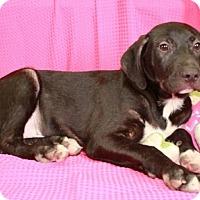 Adopt A Pet :: Skipper - Newark, NJ