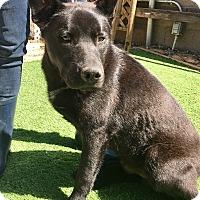 Adopt A Pet :: Oso - Santa Ana, CA