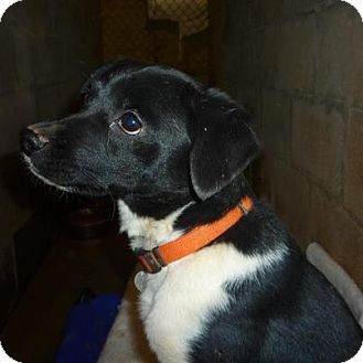 Feist/Terrier (Unknown Type, Small) Mix Dog for adoption in Linden, Tennessee - Buster