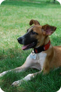 Terrier (Unknown Type, Small) Mix Puppy for adoption in Brooklyn, New York - Esteban
