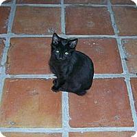 Adopt A Pet :: Buttercup - Scottsdale, AZ