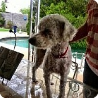 Adopt A Pet :: Penny - Only $85 adoption fee! - Litchfield Park, AZ