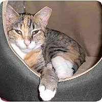 Adopt A Pet :: Tilly - Lombard, IL