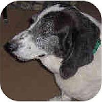 Adopt A Pet :: Piepier - Phoenix, AZ