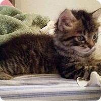 Adopt A Pet :: Jack - Ocala, FL