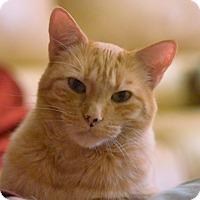 Adopt A Pet :: Mickey - Laguna Woods, CA