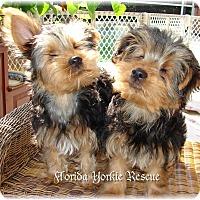 Adopt A Pet :: Blind Puppies - Palm City, FL