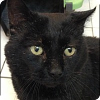 Adopt A Pet :: Callen - Brampton, ON