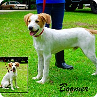 Adopt A Pet :: Boomer - Daleville, AL