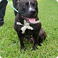 Adopt A Pet :: Liberty - Ft. Myers, FL