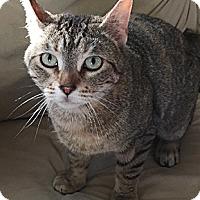 Adopt A Pet :: Elsa - Oakland, CA