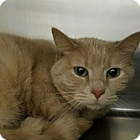 Adopt A Pet :: Patches - Elyria, OH