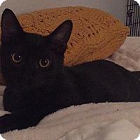 Adopt A Pet :: Angus - Gainesville, FL