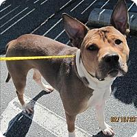 Adopt A Pet :: 17-02-0451 Houdini - Dallas, GA