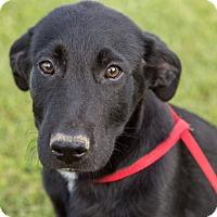 Adopt A Pet :: Jazzy - Austin, AR
