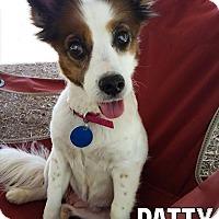 Adopt A Pet :: Patti - Oak Ridge, TN