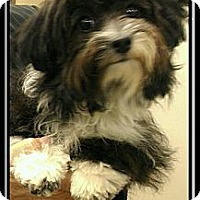 Adopt A Pet :: Patsy - Fort Braff, CA