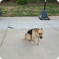 Adopt A Pet :: Kane (Guest) - Roswell, GA