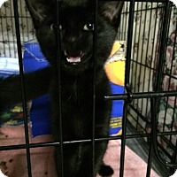 Adopt A Pet :: Shadow - Byron Center, MI