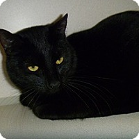 Adopt A Pet :: Manly - Hamburg, NY