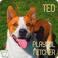 Cattle Dog Mix Dog for adoption in Washburn, Missouri - Ted