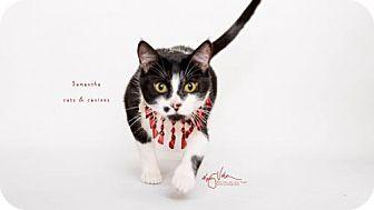 Domestic Shorthair Cat for adoption in Corona, California - MAMA SAMANTHA - SANTA BARBARA
