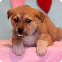 Adopt A Pet :: Manar - Waldorf, MD