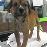 Adopt A Pet :: Kermie - Fort Collins, CO