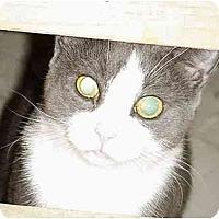 Adopt A Pet :: Wicket - Chesapeake, VA