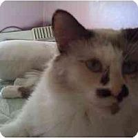 Adopt A Pet :: Gizmo - Loveland, CO