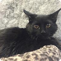 Adopt A Pet :: Sampson - Modesto, CA