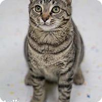 Adopt A Pet :: Bubbles - Merrifield, VA