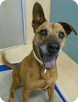 Shepherd (Unknown Type) Mix Dog for adoption in Palm City, Florida - Max