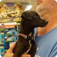 Adopt A Pet :: Ramos - Evans, GA