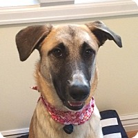 Adopt A Pet :: Sandra - Denver, CO