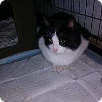Adopt A Pet :: Benny - Covington, PA