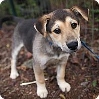 Adopt A Pet :: Triscuit - Harrisonburg, VA