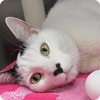 Adopt A Pet :: Rudy - Jackson, NJ