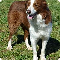Adopt A Pet :: Remi - Westport, CT